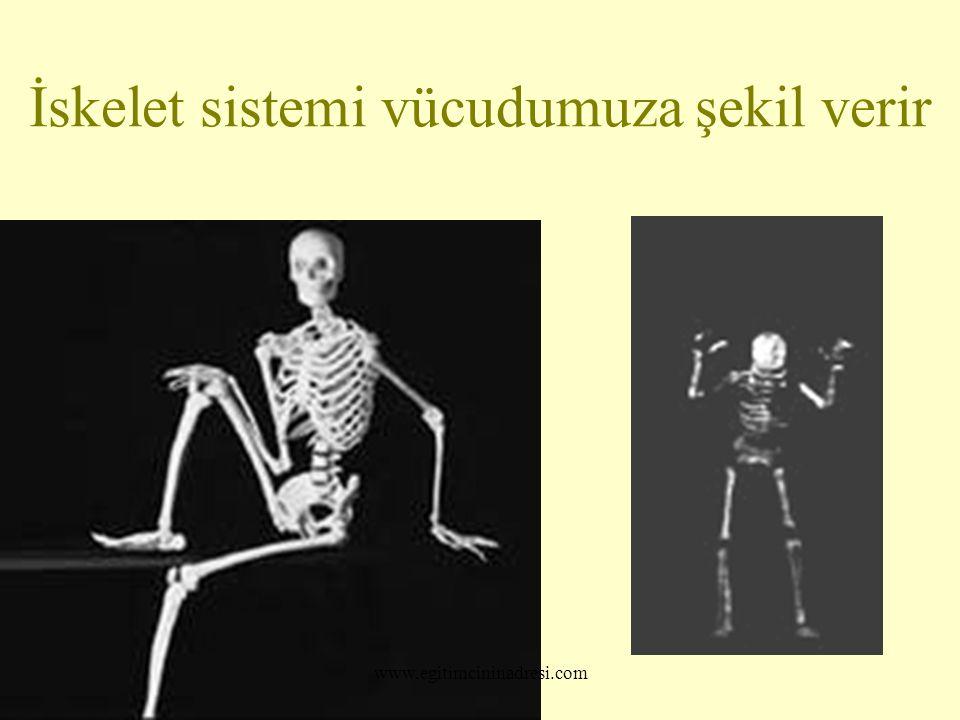 İskelet sistemi vücudumuza şekil verir www.egitimcininadresi.com