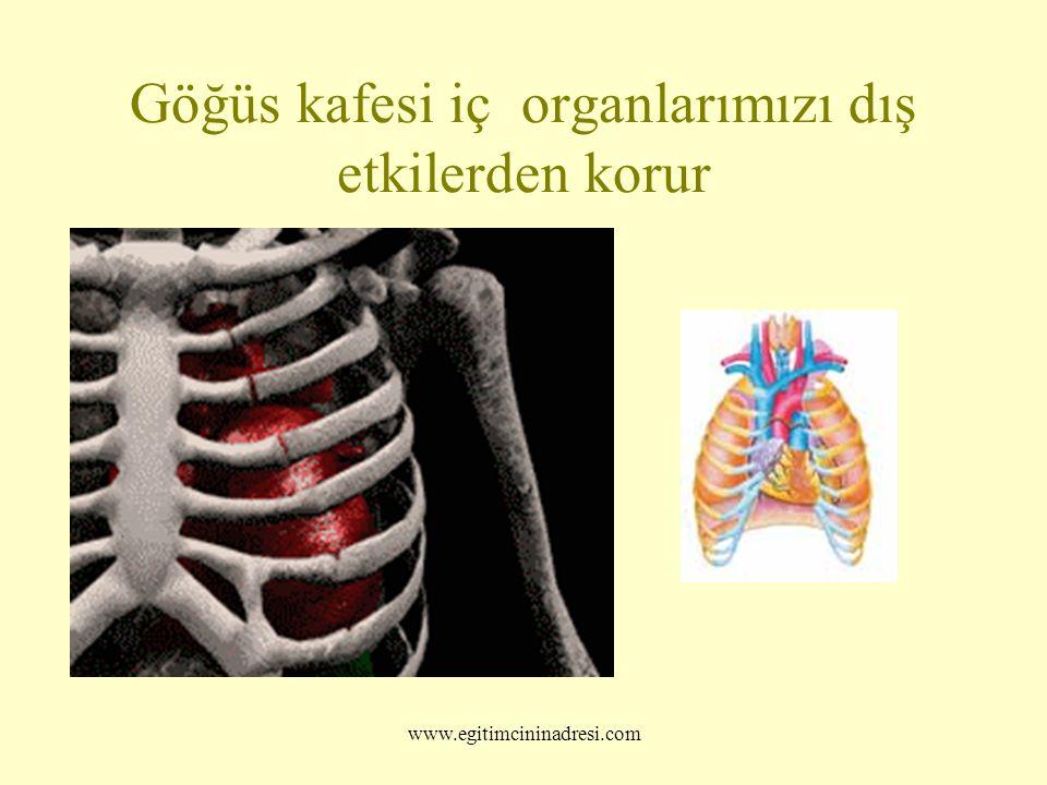 Göğüs kafesi iç organlarımızı dış etkilerden korur www.egitimcininadresi.com