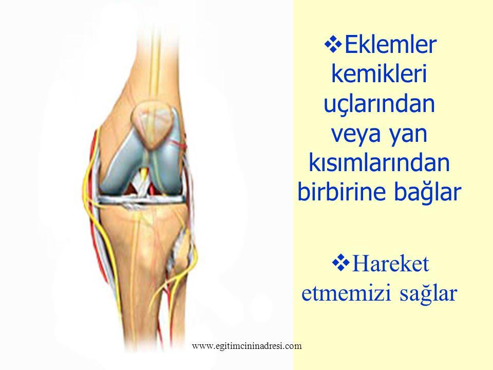  Eklemler kemikleri uçlarından veya yan kısımlarından birbirine bağlar  Hareket etmemizi sağlar www.egitimcininadresi.com