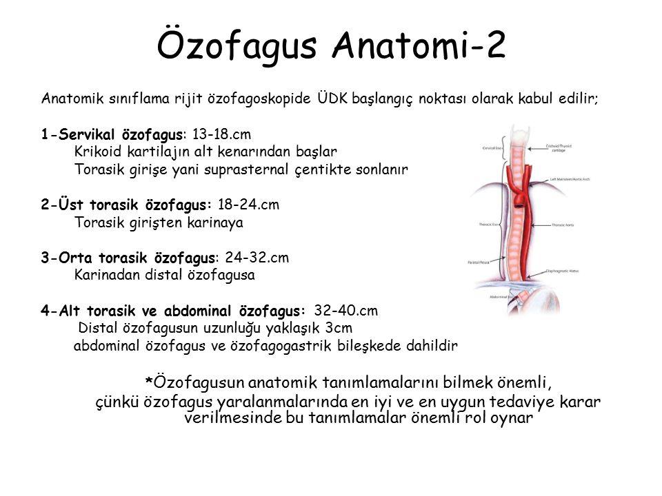 Özofagus Anatomi-2 Anatomik sınıflama rijit özofagoskopide ÜDK başlangıç noktası olarak kabul edilir; 1-Servikal özofagus: 13-18.cm Krikoid kartilajın