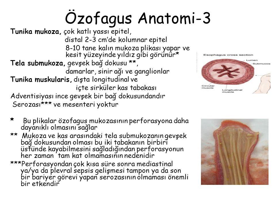 Özofagus Anatomi-3 Tunika mukoza, çok katlı yassı epitel, distal 2-3 cm'de kolumnar epitel 8-10 tane kalın mukoza plikası yapar ve kesit yüzeyinde yıl