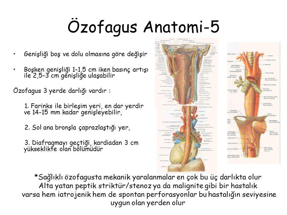 Özofagus Anatomi-5 Genişliği boş ve dolu olmasına göre değişir Boşken genişliği 1-1,5 cm iken basınç artışı ile 2,5-3 cm genişliğe ulaşabilir Özofagus