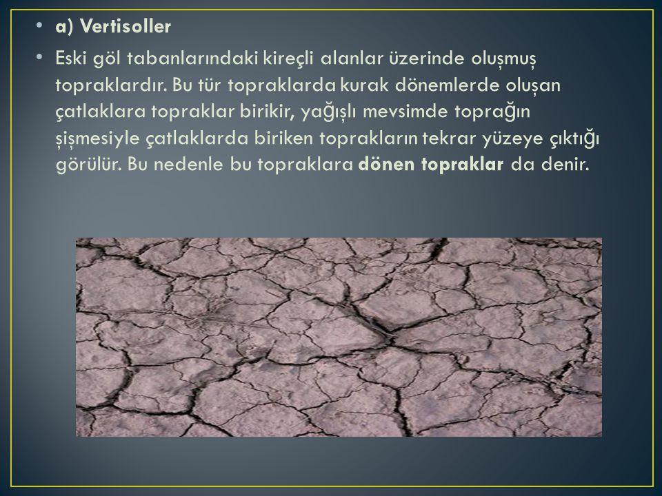 a) Vertisoller Eski göl tabanlarındaki kireçli alanlar üzerinde oluşmuş topraklardır. Bu tür topraklarda kurak dönemlerde oluşan çatlaklara topraklar