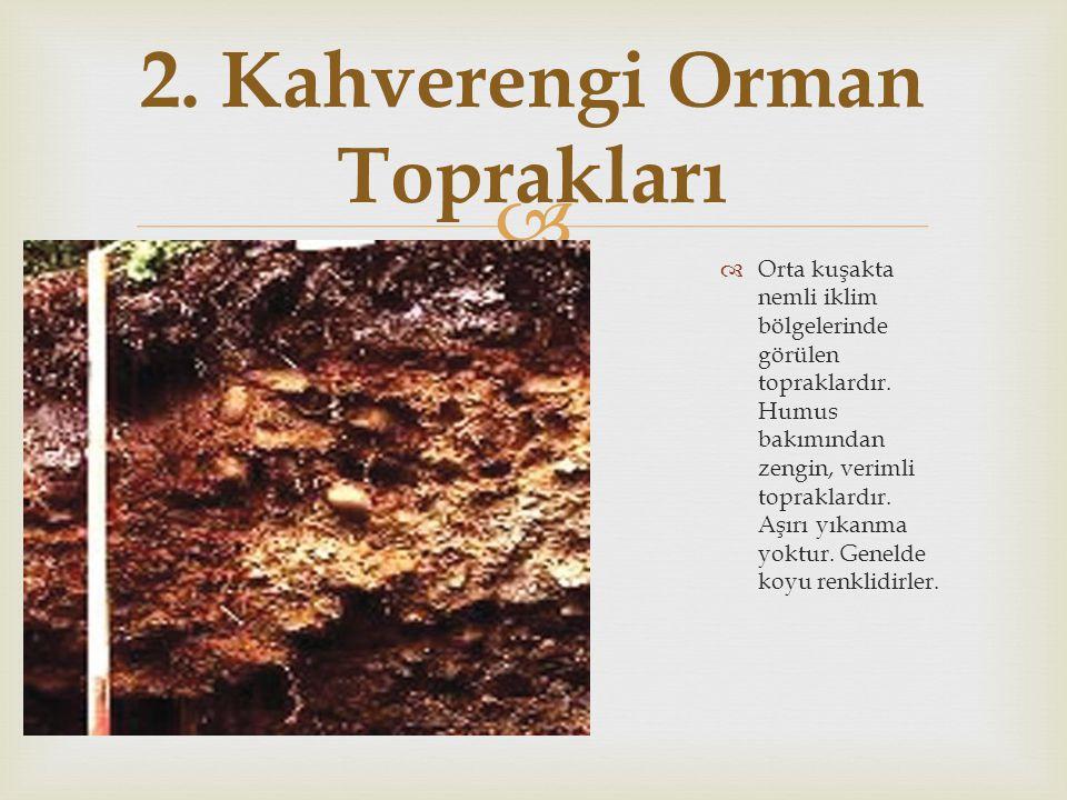  OOrta kuşakta nemli iklim bölgelerinde görülen topraklardır. Humus bakımından zengin, verimli topraklardır. Aşırı yıkanma yoktur. Genelde koyu re