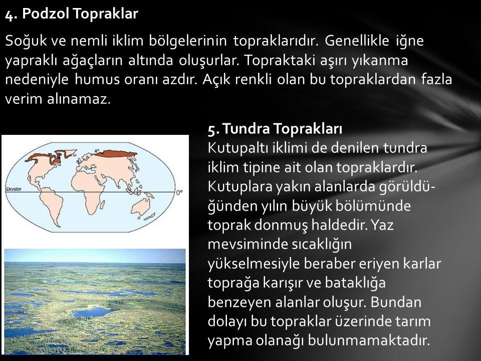4. Podzol Topraklar Soğuk ve nemli iklim bölgelerinin topraklarıdır. Genellikle iğne yapraklı ağaçların altında oluşurlar. Topraktaki aşırı yıkanma ne