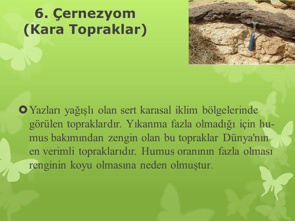 6. Çernezyom (Kara Topraklar)  Yazları yağışlı olan sert karasal iklim bölgelerinde görülen topraklardır. Yıkanma fazla olmadığı için hu mus bakımın