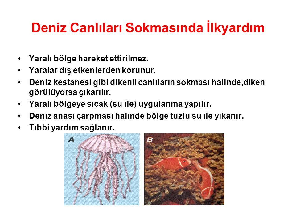 Deniz Canlıları Sokmasında İlkyardım Yaralı bölge hareket ettirilmez. Yaralar dış etkenlerden korunur. Deniz kestanesi gibi dikenli canlıların sokması