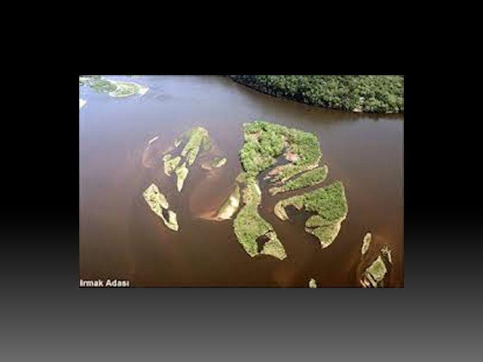  Genellikle gelgit olayının belirgin olduğu yerlerde, bu olaydan doğan akıntıların etki yaptığı kıyılarda akarsu ağızlarının huni biçiminde genişlemiş ve kıyıya sokulmuş biçimi.