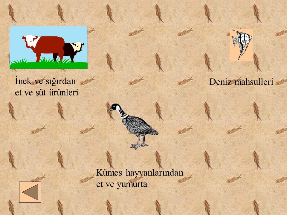 İnek ve sığırdan et ve süt ürünleri Deniz mahsulleri Kümes hayvanlarından et ve yumurta
