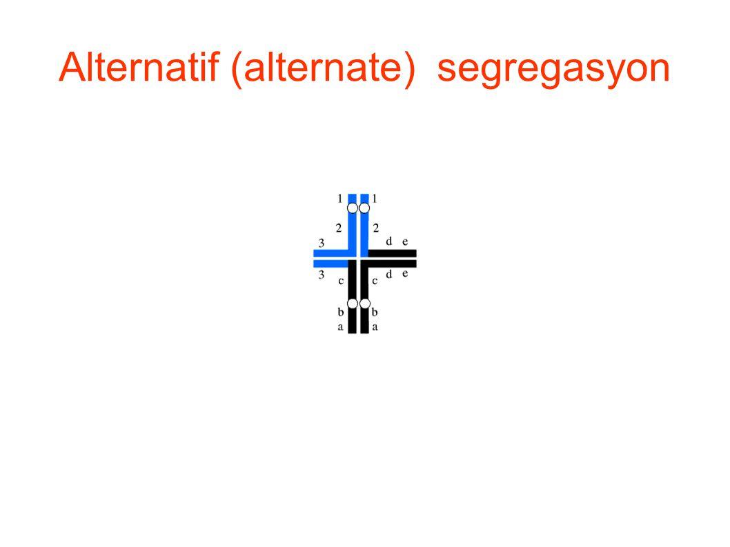 Alternatif (alternate) segregasyon