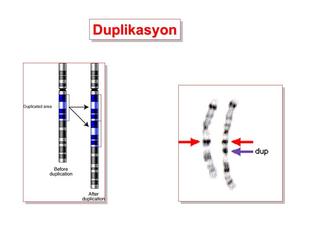 DuplikasyonDuplikasyon