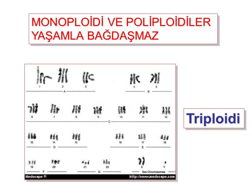 MONOPLOİDİ VE POLİPLOİDİLER YAŞAMLA BAĞDAŞMAZ MONOPLOİDİ VE POLİPLOİDİLER YAŞAMLA BAĞDAŞMAZ TriploidiTriploidi