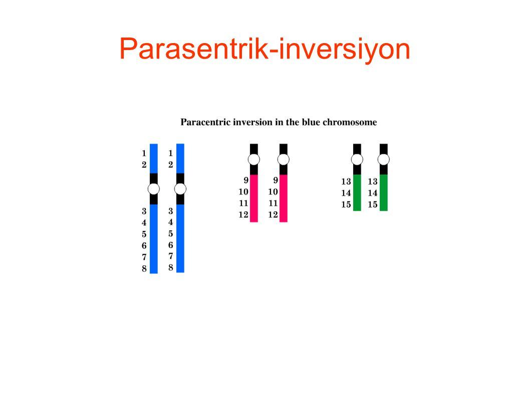 Translokasyonlarda genetik içerik bir kromozomdan diğerine aktarılır.