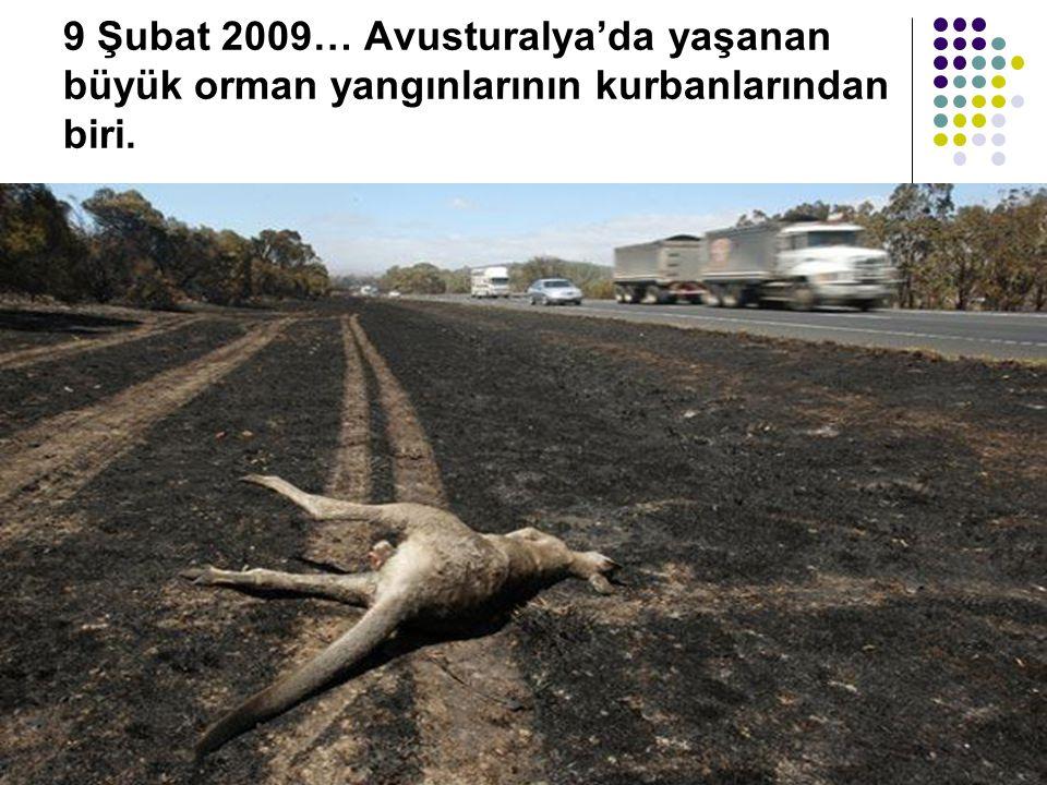 9 Şubat 2009… Avusturalya'da yaşanan büyük orman yangınlarının kurbanlarından biri.