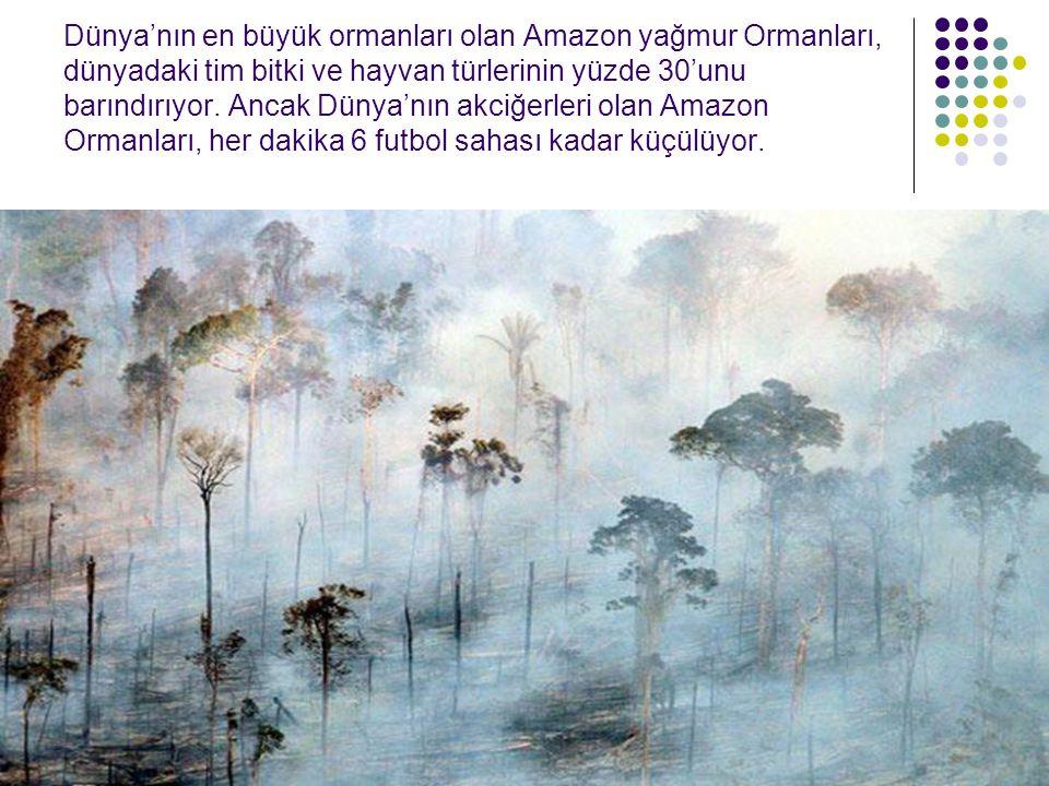 Dünya'nın en büyük ormanları olan Amazon yağmur Ormanları, dünyadaki tim bitki ve hayvan türlerinin yüzde 30'unu barındırıyor. Ancak Dünya'nın akciğer