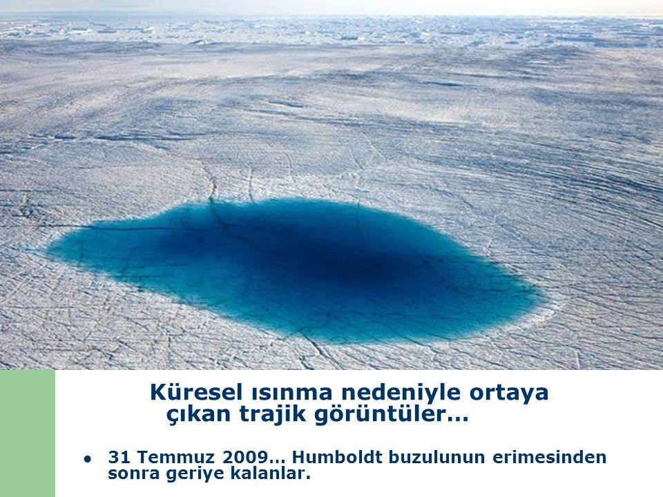 Küresel ısınma nedeniyle ortaya çıkan trajik görüntüler… 31 Temmuz 2009… Humboldt buzulunun erimesinden sonra geriye kalanlar.