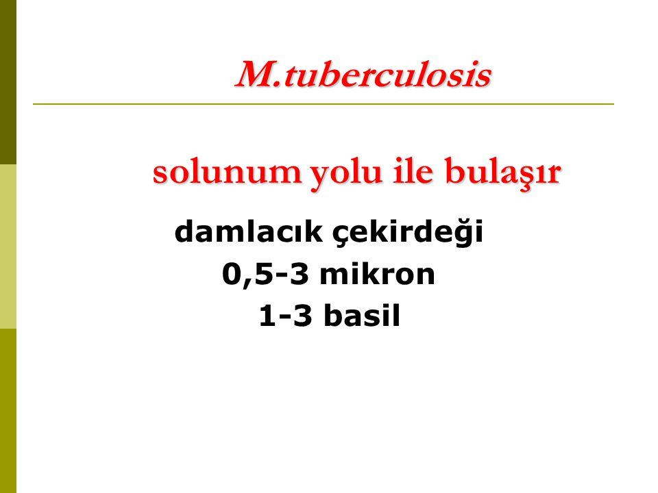 M.tuberculosis solunum yolu ile bulaşır M.tuberculosis solunum yolu ile bulaşır damlacık çekirdeği 0,5-3 mikron 1-3 basil