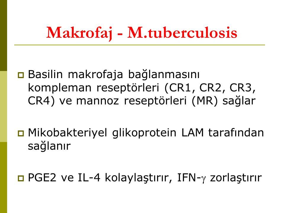 Makrofaj - M.tuberculosis  Basilin makrofaja bağlanmasını kompleman reseptörleri (CR1, CR2, CR3, CR4) ve mannoz reseptörleri (MR) sağlar  Mikobakteriyel glikoprotein LAM tarafından sağlanır  PGE2 ve IL-4 kolaylaştırır, IFN- zorlaştırır