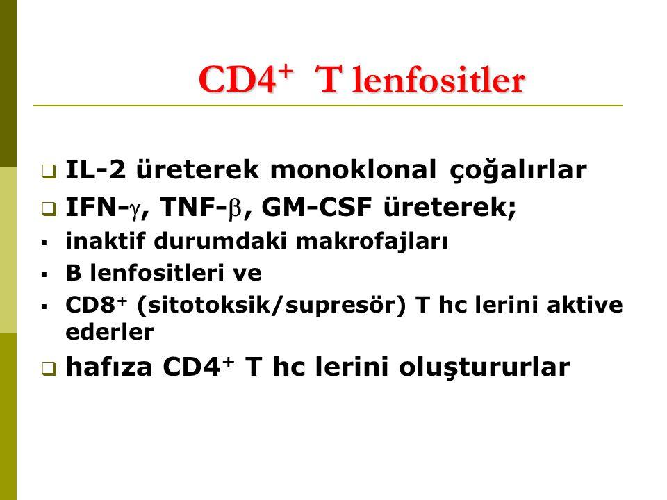 CD4 + T lenfositler  IL-2 üreterek monoklonal çoğalırlar  IFN-, TNF-, GM-CSF üreterek;  inaktif durumdaki makrofajları  B lenfositleri ve  CD8 + (sitotoksik/supresör) T hc lerini aktive ederler  hafıza CD4 + T hc lerini oluştururlar