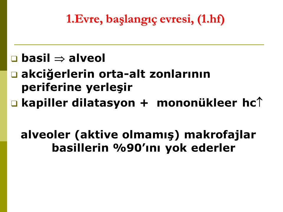 1.Evre, başlangıç evresi, (1.hf)  basil  alveol  akciğerlerin orta-alt zonlarının periferine yerleşir  kapiller dilatasyon + mononükleer hc alveoler (aktive olmamış) makrofajlar basillerin %90'ını yok ederler