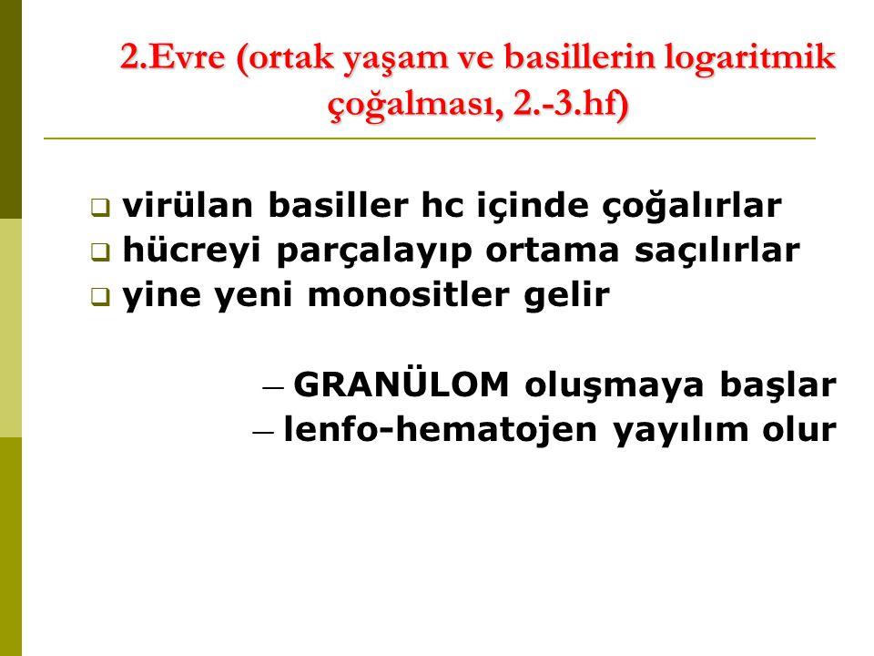 2.Evre (ortak yaşam ve basillerin logaritmik çoğalması, 2.-3.hf)  virülan basiller hc içinde çoğalırlar  hücreyi parçalayıp ortama saçılırlar  yine yeni monositler gelir — GRANÜLOM oluşmaya başlar — lenfo-hematojen yayılım olur