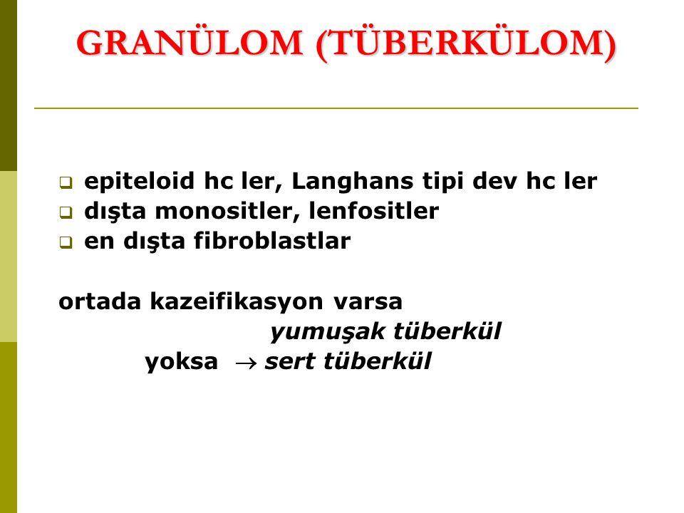 GRANÜLOM (TÜBERKÜLOM) GRANÜLOM (TÜBERKÜLOM)  epiteloid hc ler, Langhans tipi dev hc ler  dışta monositler, lenfositler  en dışta fibroblastlar ortada kazeifikasyon varsa yumuşak tüberkül yoksa  sert tüberkül