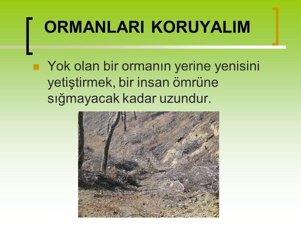 ORMANLARI KORUYALIM Yok olan bir ormanın yerine yenisini yetiştirmek, bir insan ömrüne sığmayacak kadar uzundur.