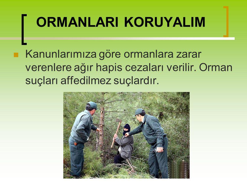 ORMANLARI KORUYALIM Kanunlarımıza göre ormanlara zarar verenlere ağır hapis cezaları verilir. Orman suçları affedilmez suçlardır.