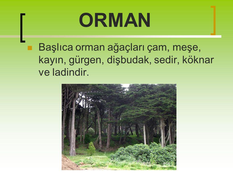 ORMAN Başlıca orman ağaçları çam, meşe, kayın, gürgen, dişbudak, sedir, köknar ve ladindir.