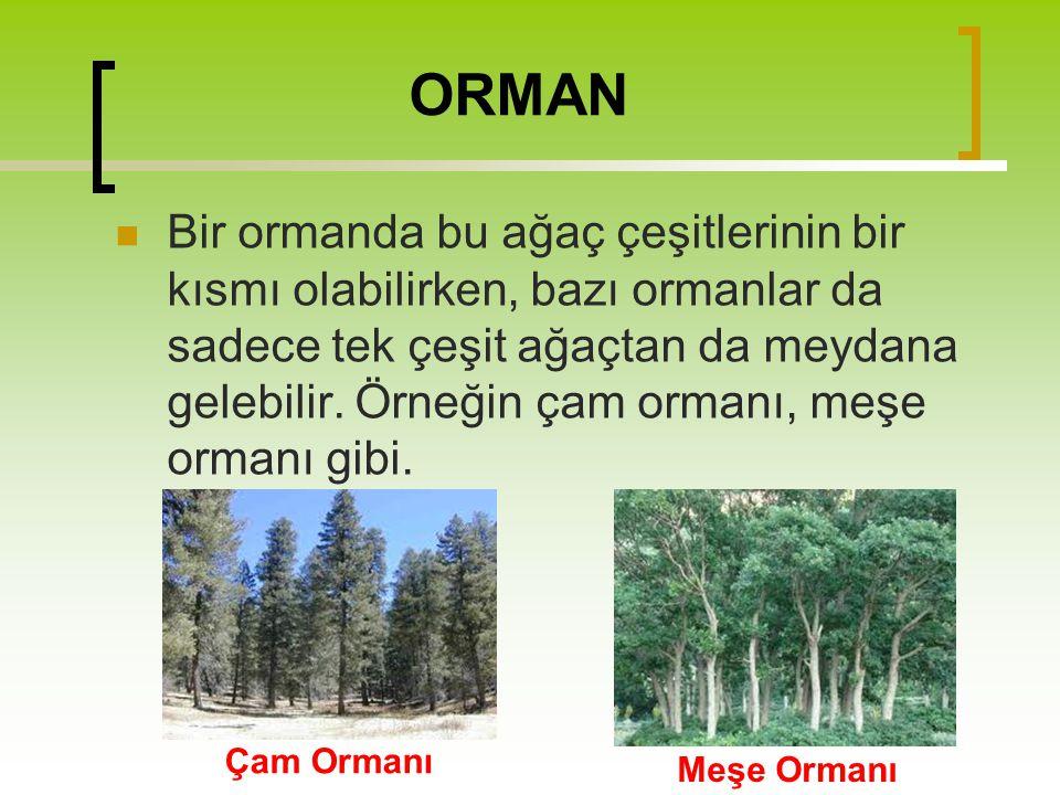 ORMAN Bir ormanda bu ağaç çeşitlerinin bir kısmı olabilirken, bazı ormanlar da sadece tek çeşit ağaçtan da meydana gelebilir. Örneğin çam ormanı, meşe