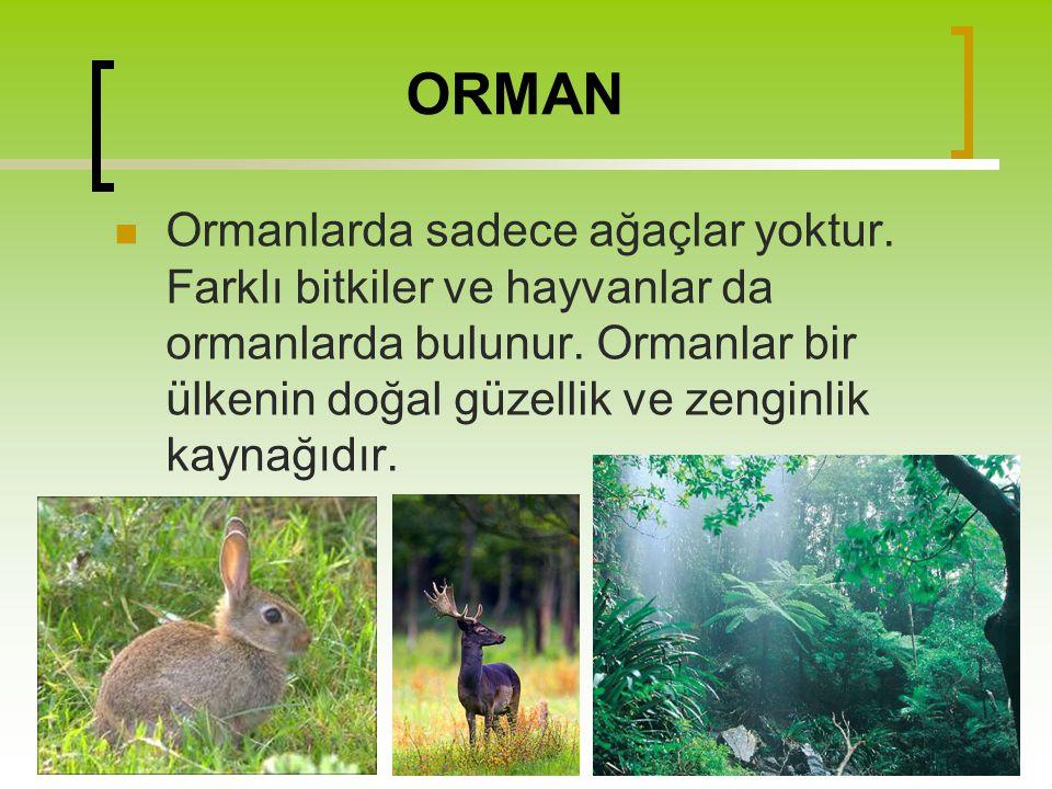 ORMAN Ormanlarda sadece ağaçlar yoktur. Farklı bitkiler ve hayvanlar da ormanlarda bulunur. Ormanlar bir ülkenin doğal güzellik ve zenginlik kaynağıdı