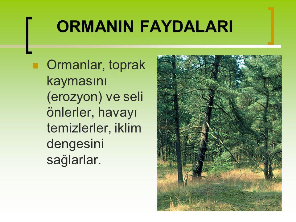 Orman Haftası İle İlgili Güzel Sözler Yaş kesen baş keser.