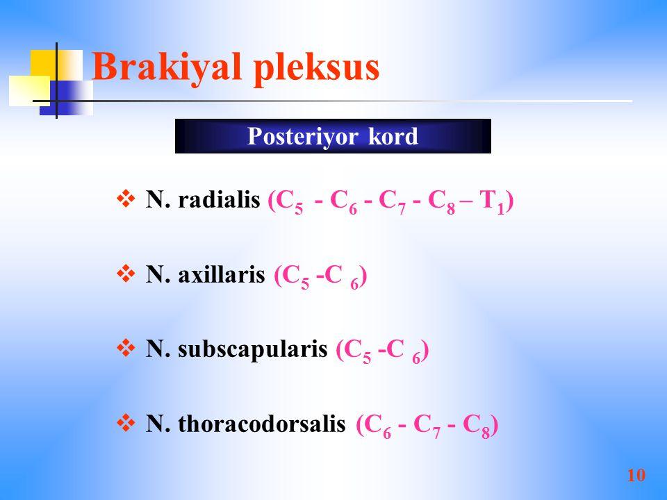 10 Brakiyal pleksus  N.radialis (C 5 - C 6 - C 7 - C 8 – T 1 )  N.