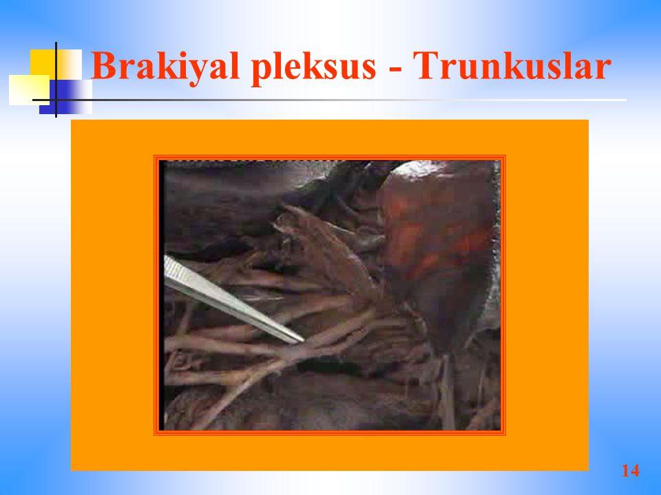 14 Brakiyal pleksus - Trunkuslar