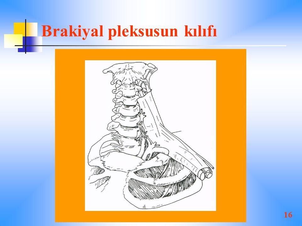 16 Brakiyal pleksusun kılıfı