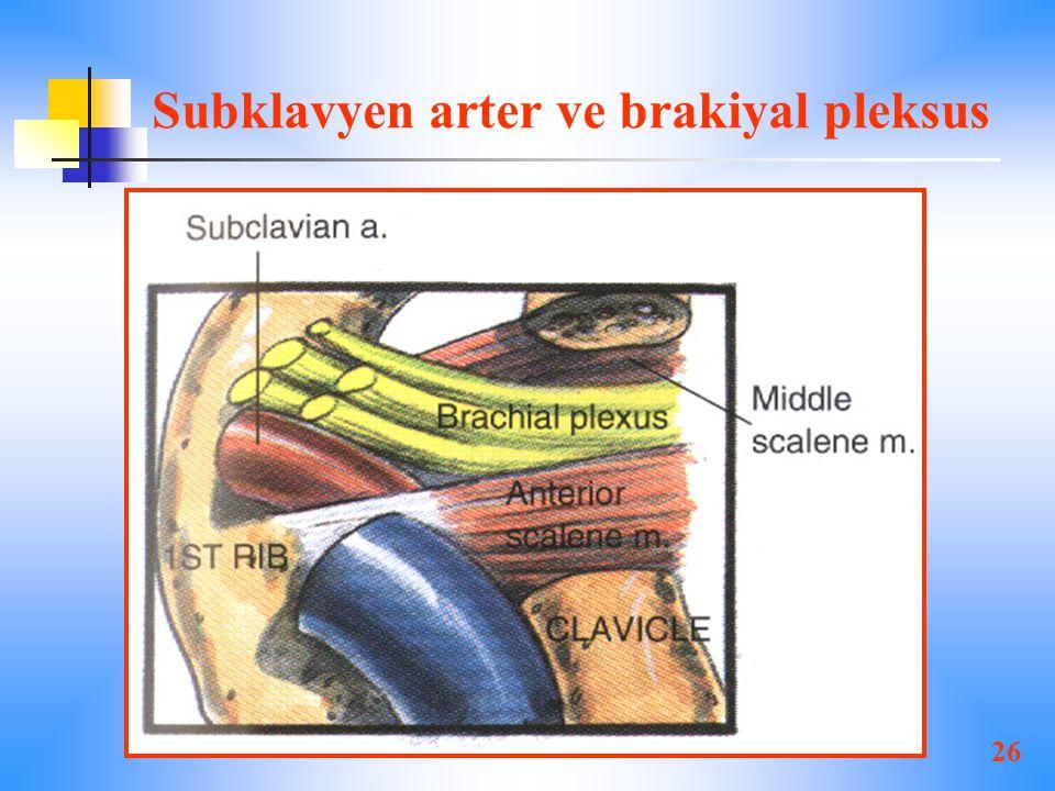 26 Subklavyen arter ve brakiyal pleksus