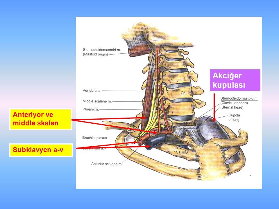 Subklavyen a-v Anteriyor ve middle skalen Akciğer kupulası