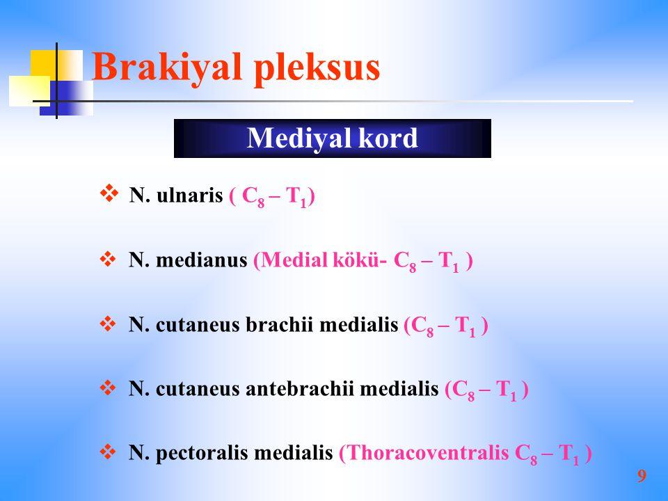 9 Brakiyal pleksus  N.ulnaris ( C 8 – T 1 )  N.