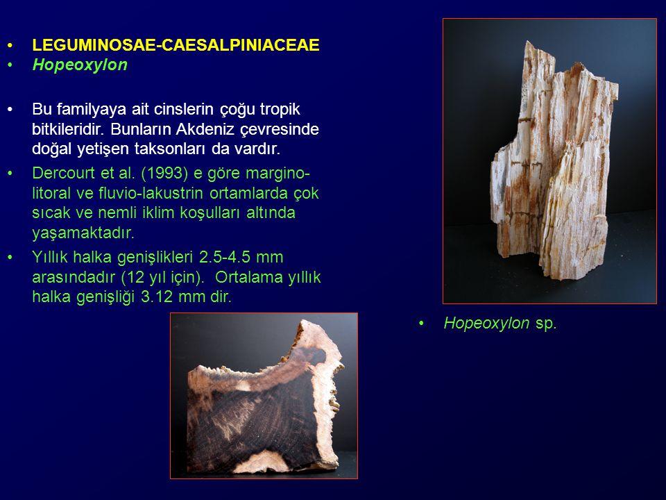 LEGUMINOSAE-CAESALPINIACEAE Hopeoxylon Bu familyaya ait cinslerin çoğu tropik bitkileridir.