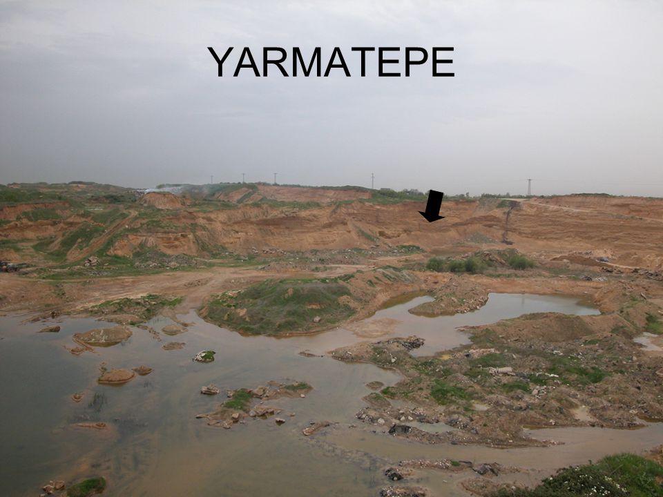 PALEOFLORA Kınalıköprü Çerkezköy arasında yer alan Yarmatepe çakıl ocağından alınan 15 silisleşmiş odun gövdesinden yapılan transversal, tanjansiyal ve radial yön kesitlerinin incelenmesinde şimdiye kadar sonuçlanan çalışmalarda örneklerin Angiospermea' ya (Kapalı tohumlular) ait olduğu kesinlik kazanmıştır.