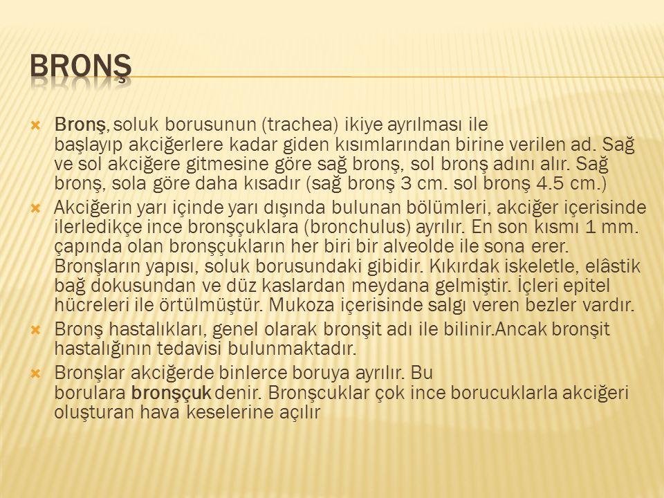  Bronş, soluk borusunun (trachea) ikiye ayrılması ile başlayıp akciğerlere kadar giden kısımlarından birine verilen ad. Sağ ve sol akciğere gitmesine