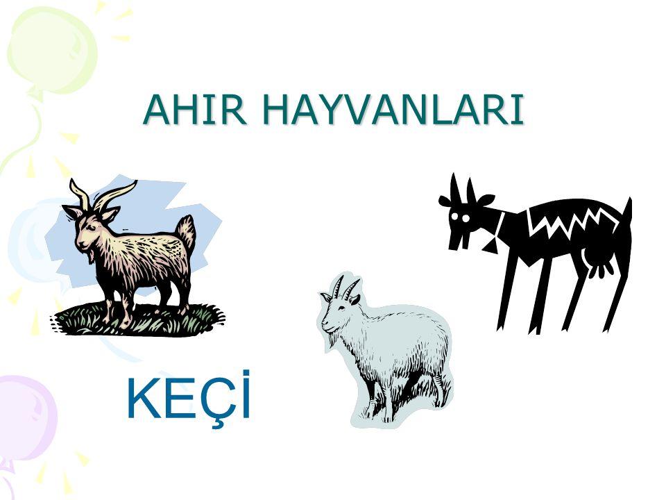 AHIR HAYVANLARI KEÇİ