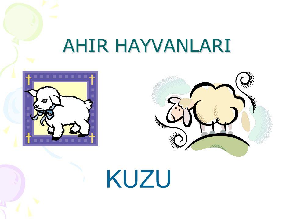 AHIR HAYVANLARI KUZU