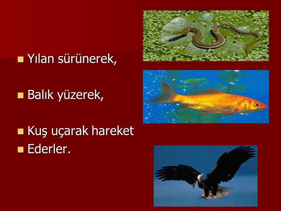 HAREKET Hayvanlar; Hayvanlar; Yiyecek bulmak için, Yiyecek bulmak için, Tehlikeden korunmak için, Tehlikeden korunmak için, Sıcak bölgelere göç etmek