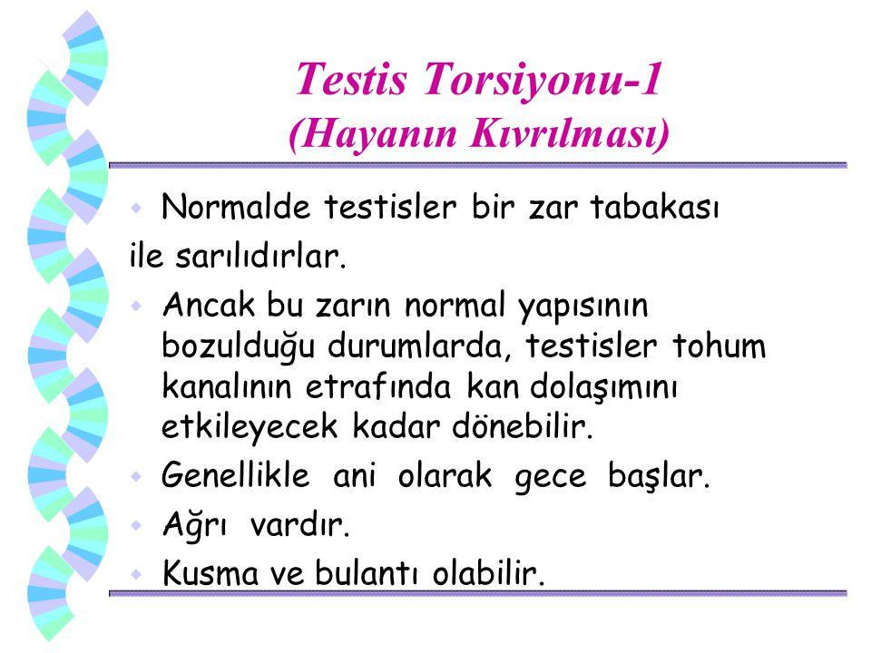 Testis Torsiyonu-1 (Hayanın Kıvrılması) w Normalde testisler bir zar tabakası ile sarılıdırlar. w Ancak bu zarın normal yapısının bozulduğu durumlarda