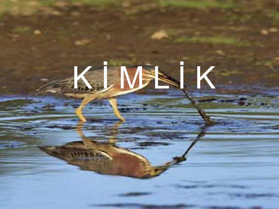 K İ M L İ K