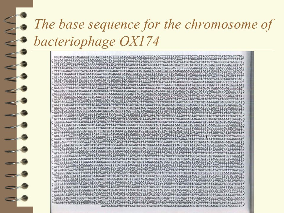 The base sequence for the chromosome of bacteriophage OX174