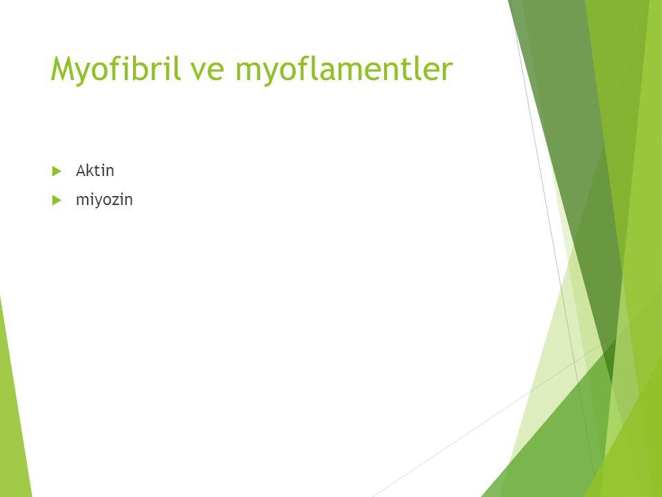 Myofibril ve myoflamentler  Aktin  miyozin