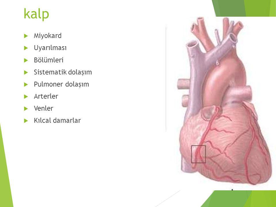 kalp  Miyokard  Uyarılması  Bölümleri  Sistematik dolaşım  Pulmoner dolaşım  Arterler  Venler  Kılcal damarlar