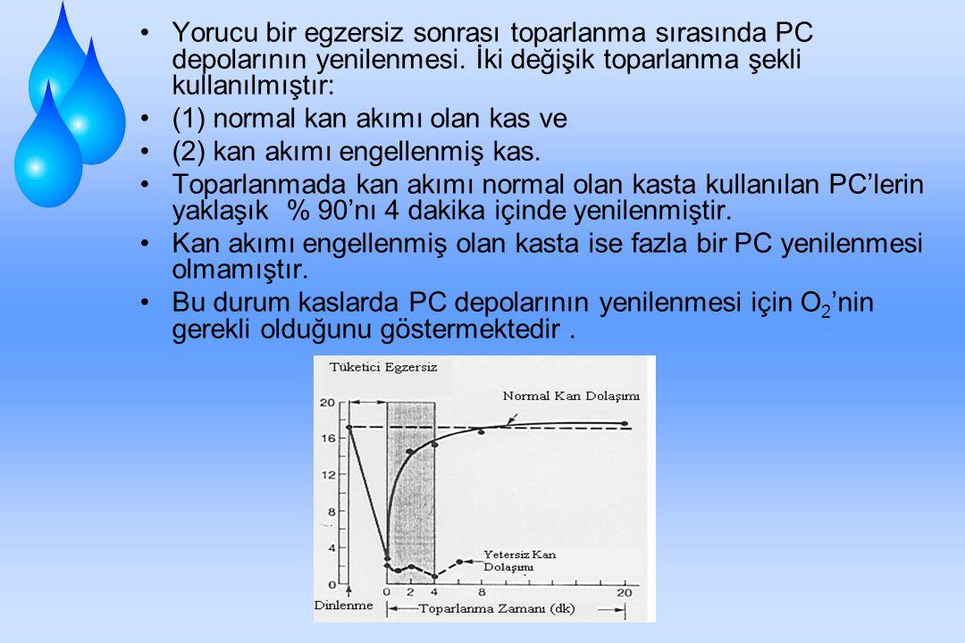 Oksijen Borçlanmasında Fosfojen Depolarının Yenilenmesi Fosfojenlerin yenilenmesi oldukça hızlıdır. (a) Egzersiz sırasında kullanılan ATP ve PC'nin bü